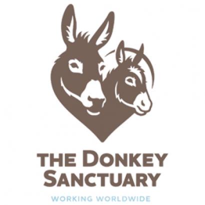 Donkey Sanctuary Summer Open Day and 50 Years Celebration